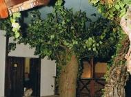 Richtige Baum in rustikale Discothek